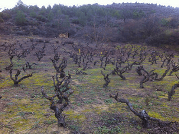 El Vino Prodigo